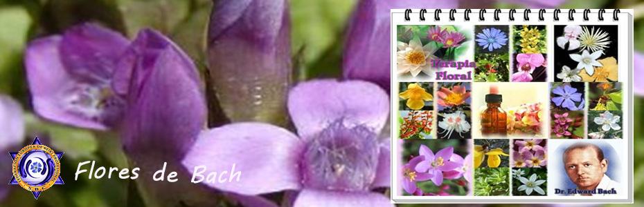Flores_Bach copy