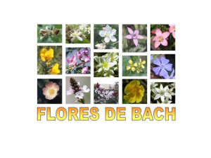flores_de_bach_g